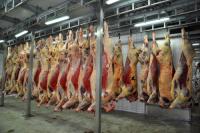 Półtusze wołowe chłodzone z krów, jałówek, byków