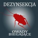 Dezynsekcja na owady biegające