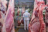 Ćwierci wołowe z byka