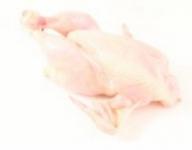 Tuszka z kurczaka świeża lub mrożona